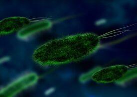 Ce s-ar întâmpla dacă ar dispărea toate virusurile de pe pământ
