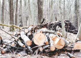 Guvernul a lansat SUMAL -  cel mai important instrument în lupta cu tăierile ilegale de pădure. Cum funcționează