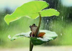 Informare meteo: Vânt puternic și ploi în noaptea de Înviere și în ziua de Paște