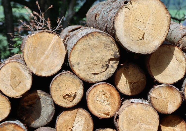 La Suceava s-au dat amenzi și s-a confiscat lemn în valoare de peste 1 milion de euro, în 2020