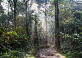 Aproape un sfert din pădurea amazoniană din Brazilia e exploatată ilegal