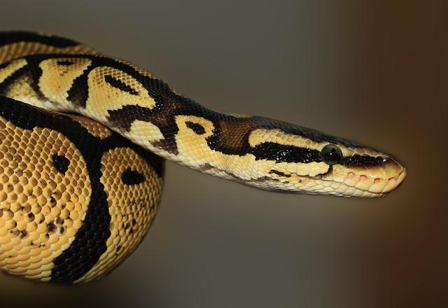Ce trebuie să faci dacă ești mușcat de șarpe