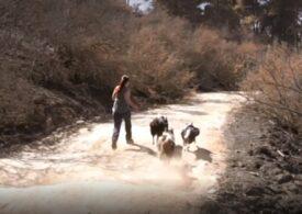 Două surori şi trei câini reîmpăduresc zonele mistuite de incendii din Chile