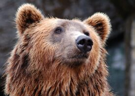 Costel Alexe: Ursul nu e animal de companie. Toţi cei care hrănesc aceste animale sălbatice trebuiesc sancţionaţi