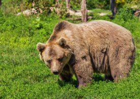 Ministerul Mediului va distribui kituri complete de garduri electrice pentru protecția în fața urșilor