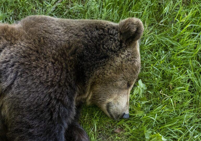 Viralul zilei: Un pui de urs, salvat din mijlocul unui lac