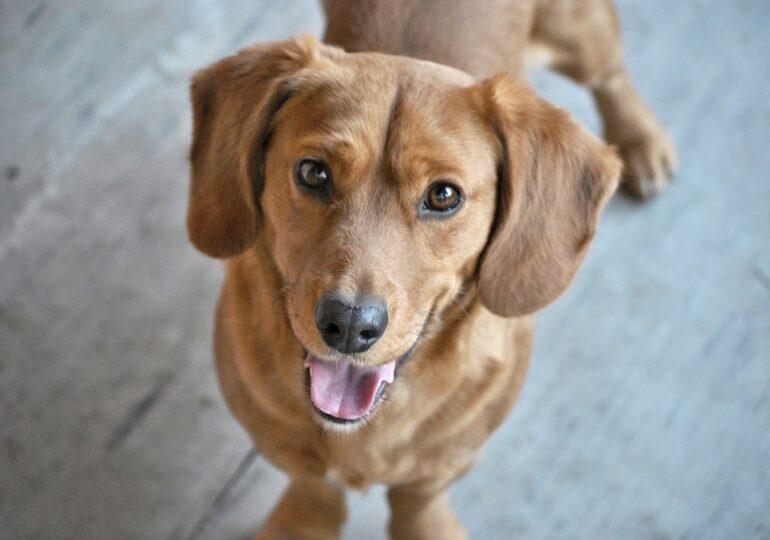 La început, oamenii au domesticit inconștient câinii - concluziile surprinzătoare ale unui studiu