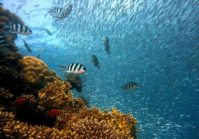 60% din speciile de pești ar putea dispărea. Rămân fără oxigen, din cauza căldurii