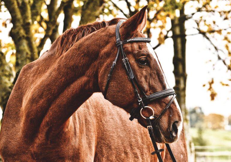 Viralul zilei: Un cal este salvat din apele mării