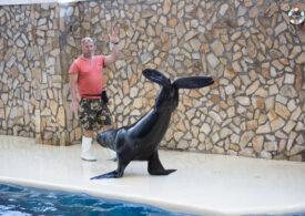 Doi lei de mare patagonieni fac show la Delfinariul din Constanța. Arena se va extinde pentru 6 delfini