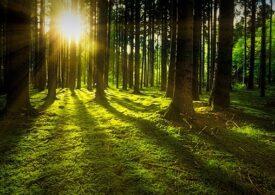 Nemţii care se recreează în natură în timpul lockdown-ului distrug pădurile