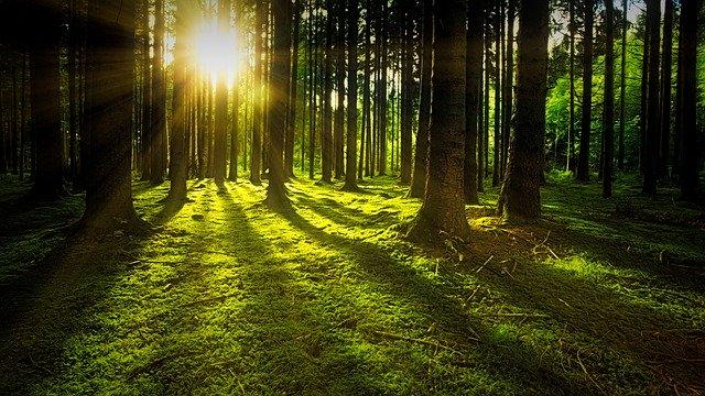 CE declanşează proceduri de infringement pentru România privind exploatarea forestieră ilegală, calitatea aerului şi protejarea reţelelor Natura 2000