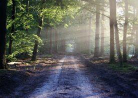"""Operaţiune de căutare demnă de seria """"Rambo"""" într-o pădure din Germania. Un bărbat a dezarmat 4 poliţişti şi a fugit"""