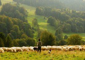 Afaceri în agricultură: Doi tineri din Sibiu produc îngrăşământ eco din lână de oaie