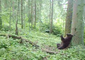 Ursul Baloo, filmat în Parcul Național Călimani
