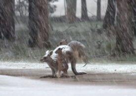 Mai multe state din sud-estul Australiei, acoperite de un strat de zăpadă