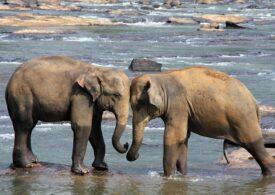 Sri Lanka va interzice importurile de produse din plastic pentru a-şi proteja elefanţii