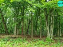 """CCR a decis că Legea privind înființarea DNA-ului pădurilor este neconstituțională <span style=""""color:#ff0000;font-size:100%;"""">UPDATE</span> Reacția USR"""