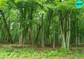Victorie uriașă în instanță pentru mediu: Secretizate de 30 de ani, informațiile despre toate pădurile României trebuie publicate