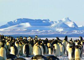 Noi colonii de pinguini imperiali au fost descoperite din satelit. E ilar ce le-a dat de gol prezența