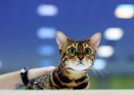 Azi e Ziua internaţională a pisicii