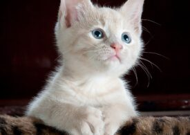 Medicamentele folosite pentru tratarea pisicilor de Covid, eficiente şi în cazul oamenilor