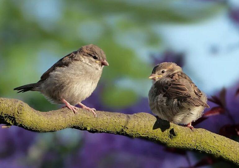 """Izolarea oamenilor în case a schimbat cântecul păsărilor. Masculii au început să cânte mai """"sexy"""" (Audio)"""