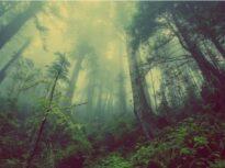 Descoperire care schimbă tot ce știam: Prea mult dioxid de carbon are un efect neașteptat, deloc benefic, asupra copacilor