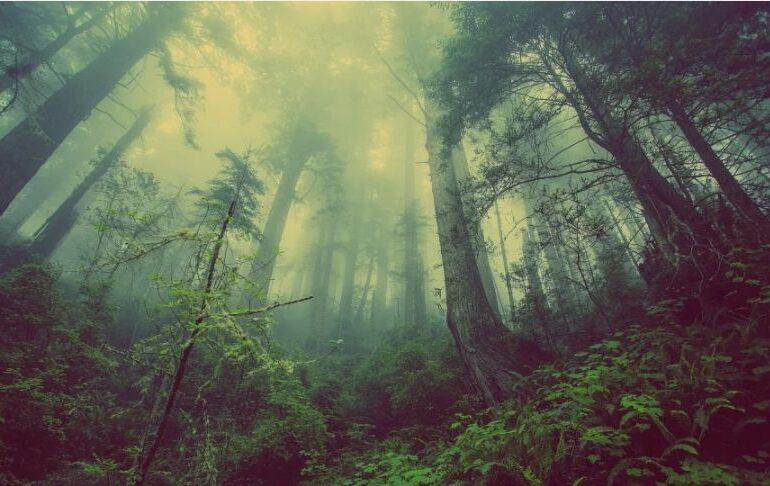 Pădurile sunt doar până la un punct salvarea noastră.  Copacii nu fac față la prea mult dioxid de carbon