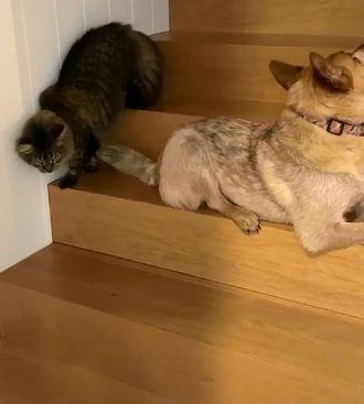 Viralul zilei:  O pisică șireată sau cel mai bun detectiv din lume?