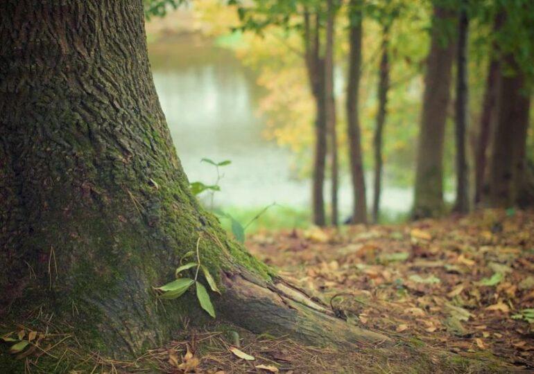 Ne așteaptă un început cald de octombrie, apoi vremea se răcește - prognoza meteo pe două săptămâni