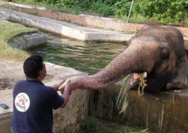 Kaavan, elefantul ale cărui condiţii precare de viaţă au impresionat o lume întreagă, va fi relocat în Cambodgia