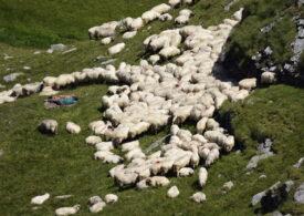 Mersul ciobanilor cu oile la munte a fost înscris în patrimoniul național și urmează fie recunoscut de UNESCO