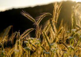 Parlamentul European a adoptat poziţia sa asupra reformei Politicii Agricole Comune: Bugetul e stabilit la 387 de milioane de euro pentru şapte ani