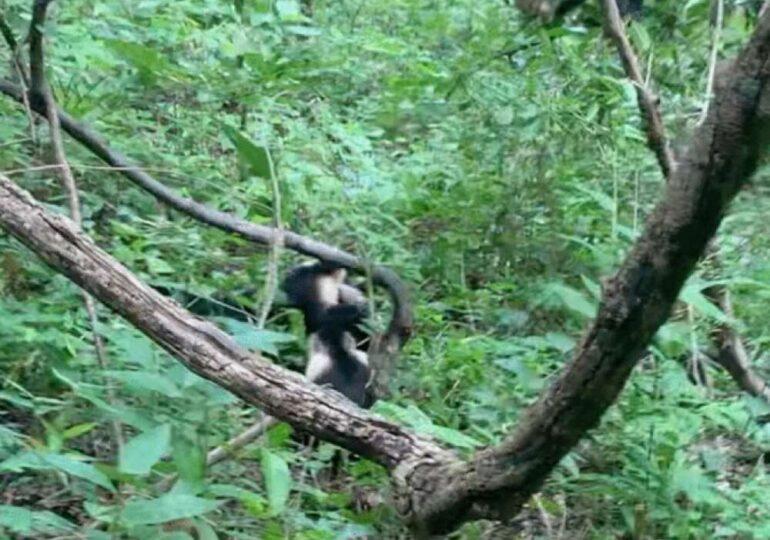 Dovada că legăturile din grupurile de primate sunt extrem de strânse. Ce s-a întâmplat când un pui de capucin a fost prins de un șarpe boa (Video)