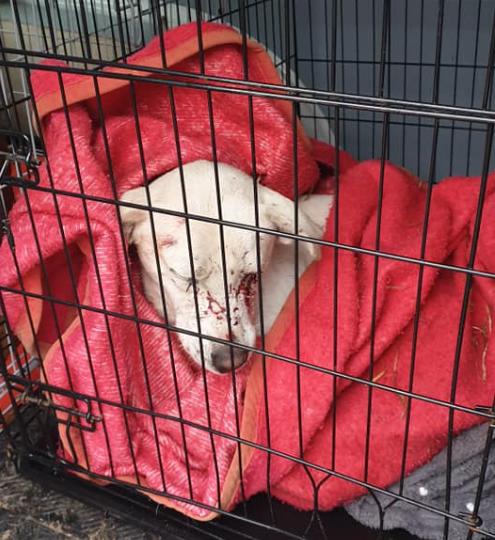 Gest șocant în Timișoara: Un bărbat a împușcat câinii unei vecine, după ce s-a întors de la vânătoare
