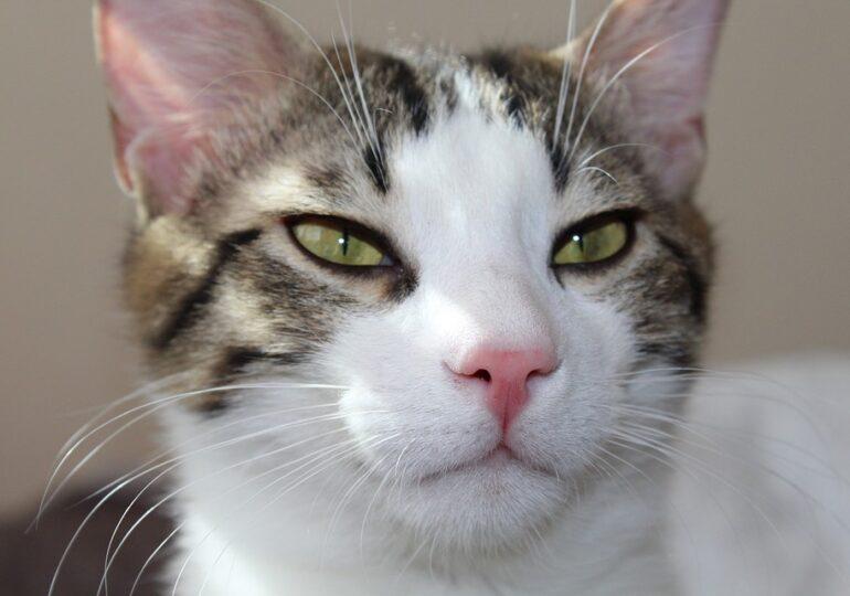 Cel mai eficient mod de a comunica cu pisica ta