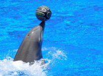Franța va interzice folosirea animalelor salbatice în circuri ambulante și parcuri marine