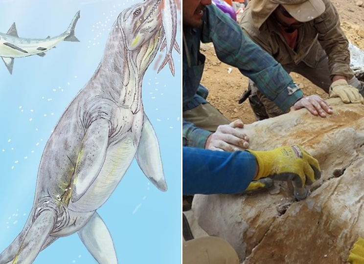 Rămășițele unui monstru marin au fost descoperite în deșert. Numai craniul măsoară un metru!
