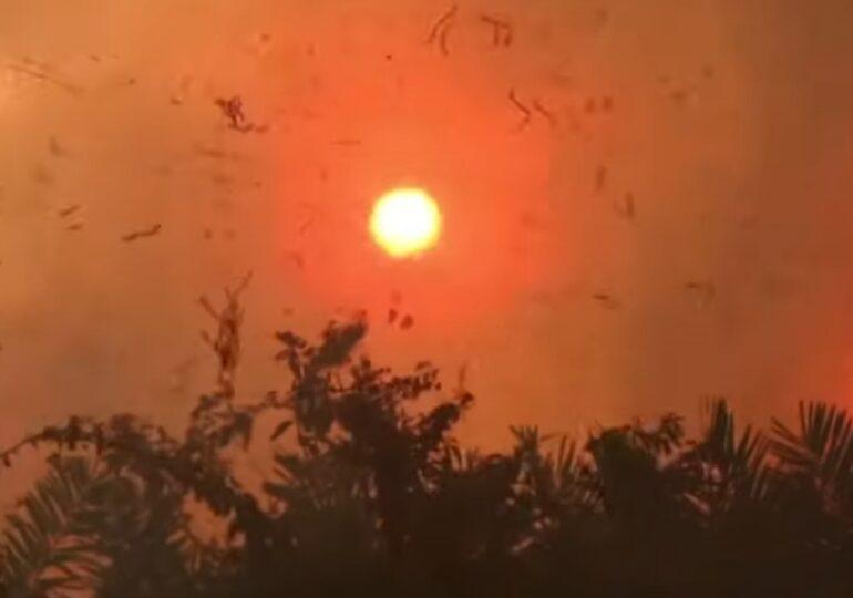 Ați crezut că anul trecut au fost grave incendiile din Pădurea Amazoniană? În 2020, în Brazilia s-au întețit cu 61%
