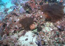Primul nou recif de corali descoperit în peste un secol! (Video)