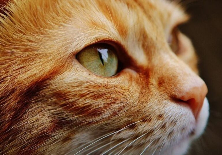 Viralul zilei: Pisica dată jos din tren pentru că nu a cumpărat bilet