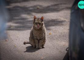 Bolile transmise de pisici costă economia Australiei 4 miliarde de dolari anual