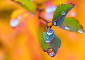 Meteo: Weekendul aduce ploi și temperaturi în scădere