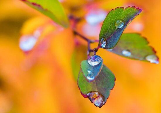 Meteo: Weekend-ul vine cu ploi