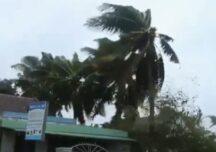 Taifunul Molave