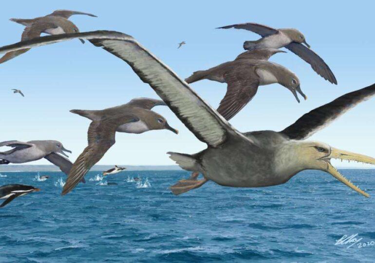 Cum arăta Antarctica acum 50 de milioane de ani? Păsări imense, cum nu mai există azi, zburau deasupra ei