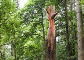 Ca un uriaş care îşi croieşte drum din adâncuri: O sculptură spectaculoasă cioplită în ciotul unui copac