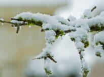 Cod portocaliu de ninsori viscolite în Tulcea și Constanța. Alte patru județe sunt sub cod galben