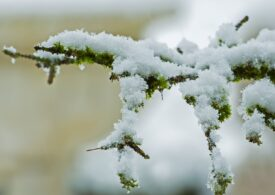 Două coduri de galbene şi informare meteo de ninsori și lapoviță, pentru toată țara. Cum va fi vremea în Capitală